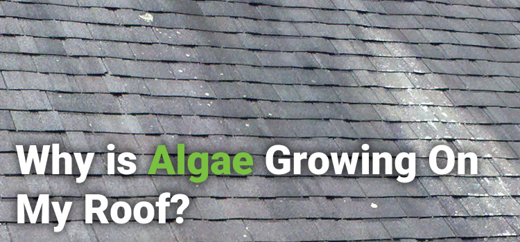 WHY IS ALGAE GROWING ON MY ROOF?