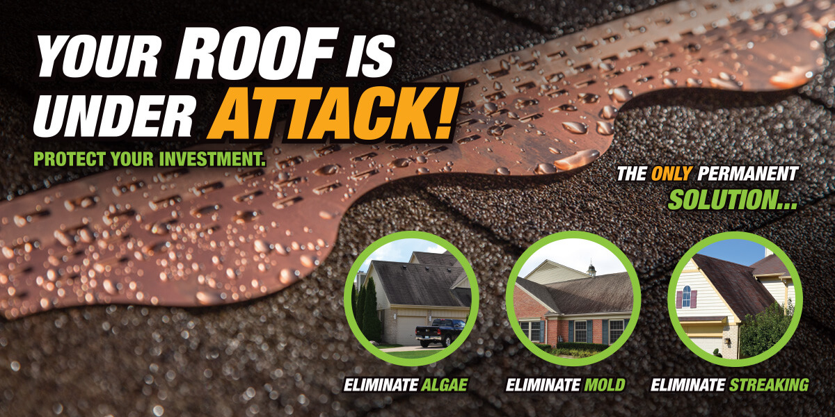 Copper Cat Get Rid Of The Algae On Your Roof Shop Now