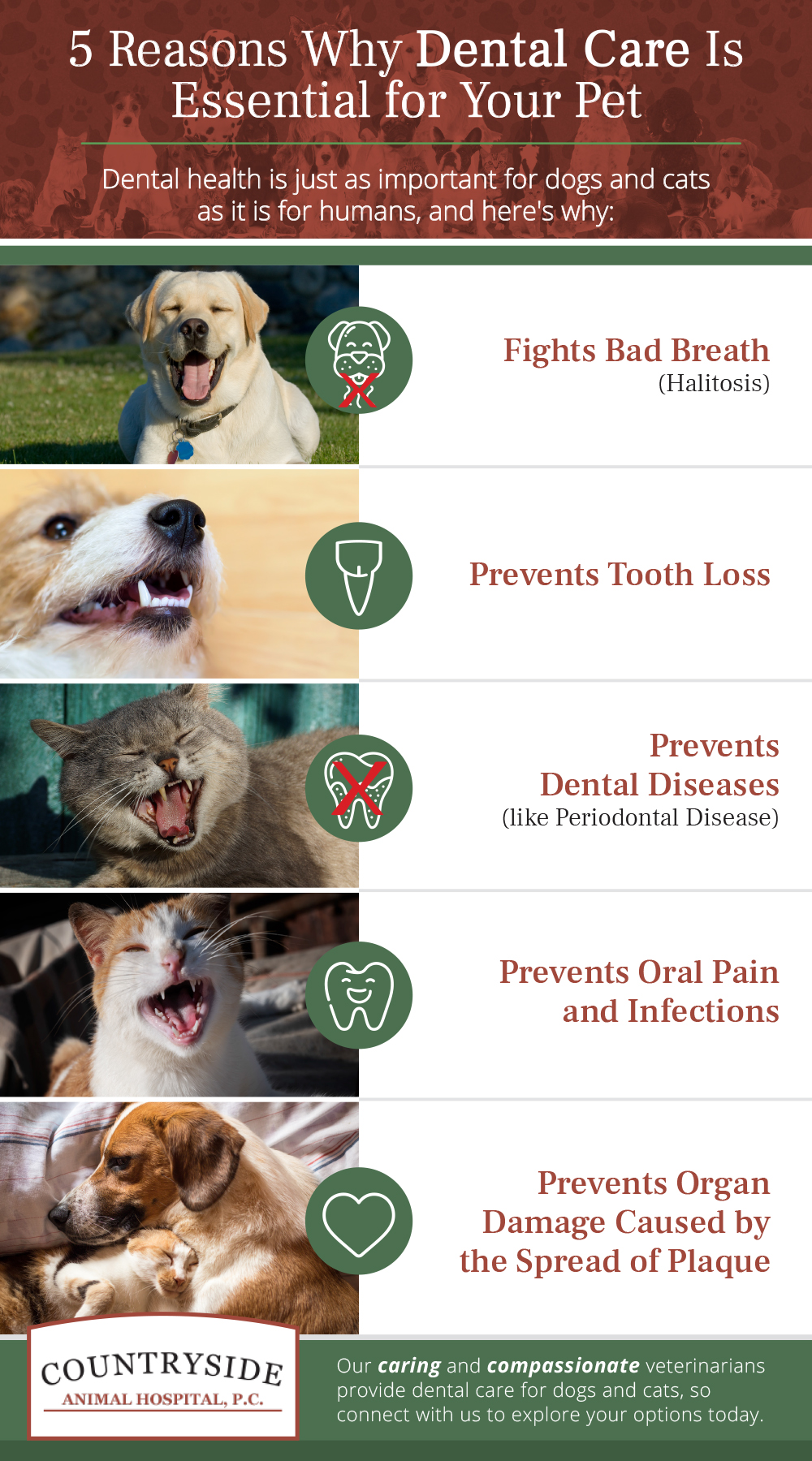 Infographic highlighting the top five reasons why pet dental care is essential for dogs and cats