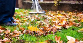 Man does landscaping work with a rake