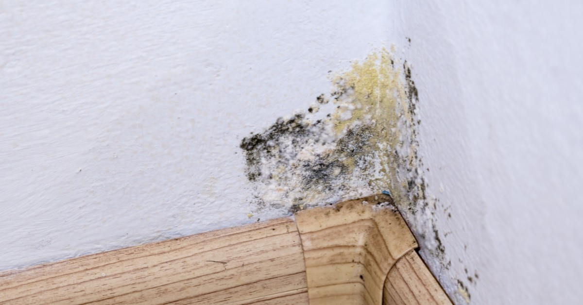 5 Common Causes of Mold Buildup In Your Home proclean gloucester