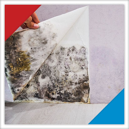 Image of someone peeling away wallpaper to uncover mold