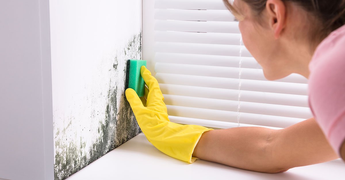 Image of a woman scrubbing mold from a wall
