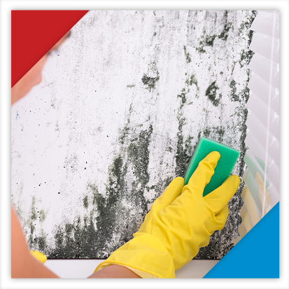 Image of a woman cleaning mold off of the wall