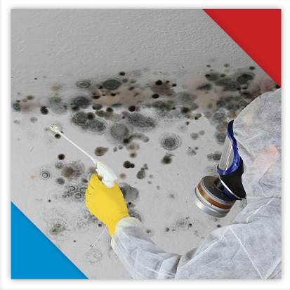 Image of a professional mold removal service
