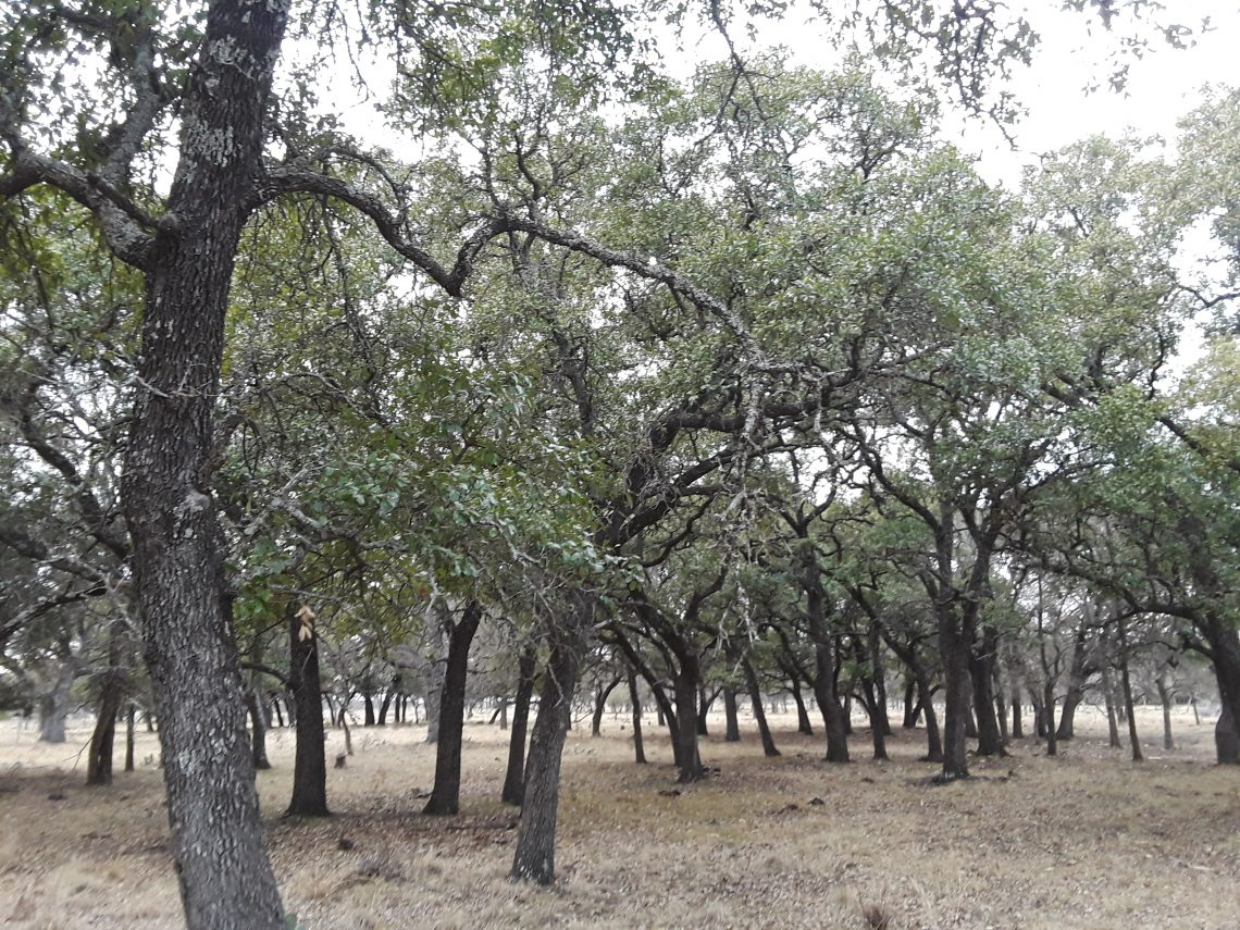 Owner Financed Land In Lampasas River, Texas - 37-188 Acres