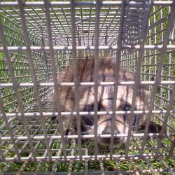 immediate pest control services powell tn