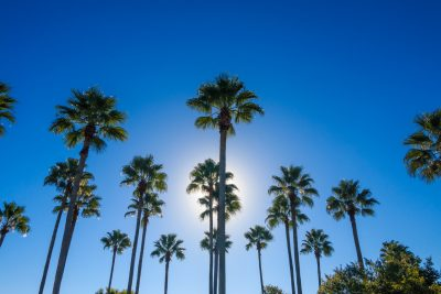 palm-tree-sky