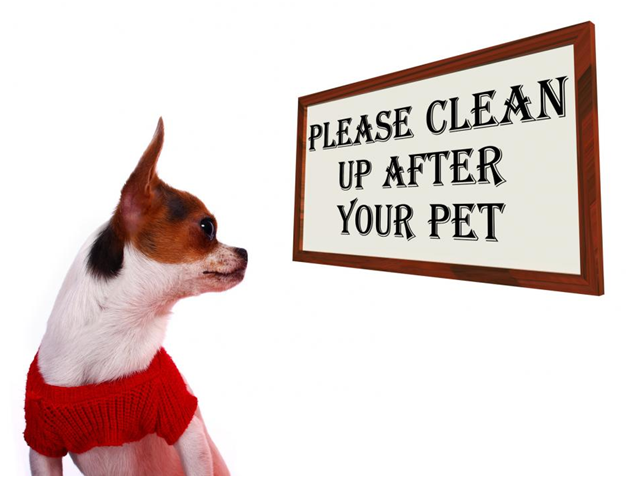 Pets in the Office? 5 TipsFor Keeping Your Office Clean
