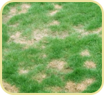 soil-conditioner-01