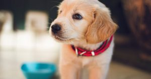 Puppy standing near his water dish