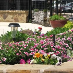landscape commercial maintenance