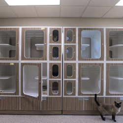 Cozy cat kennels at our pet resort in Riverside