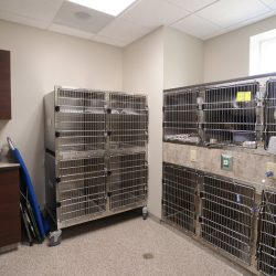 Recovery area for pets at our Riverside animal hospital