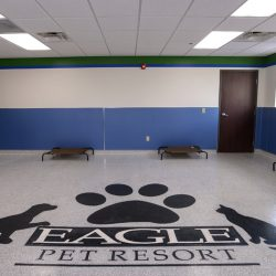 Indoor play area at our pet resort in Kansas City