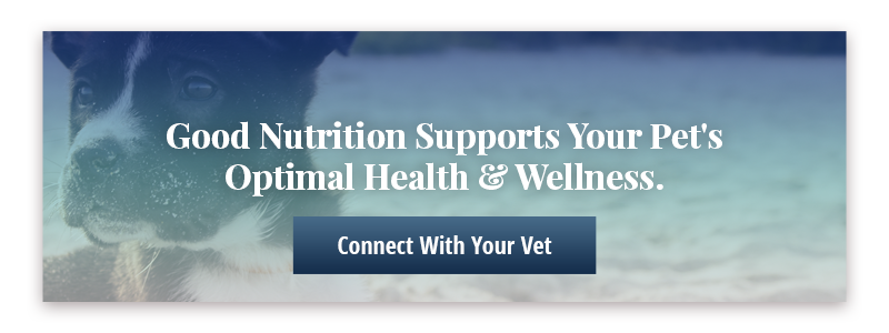 CTA: Connect With Your Vet Today