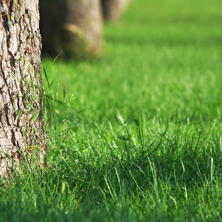 lawn care Grand Rapids