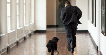 Barack Obama runs through the halls of the White House with his dog Bo.