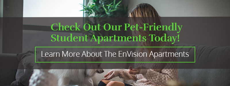 Check Out Our Pet-Friendly Student Apartments Today