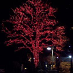 outdoor holiday lighting installation