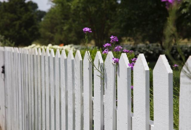 White fence, purple flowers