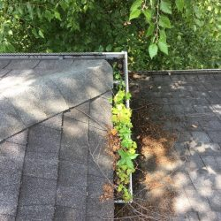 Old leaf guards on a home that needs gutter cleaning
