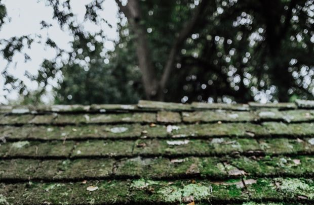 Photo by Carissa Weiser on Unsplash. A shingle roof covered with shades of green moss.
