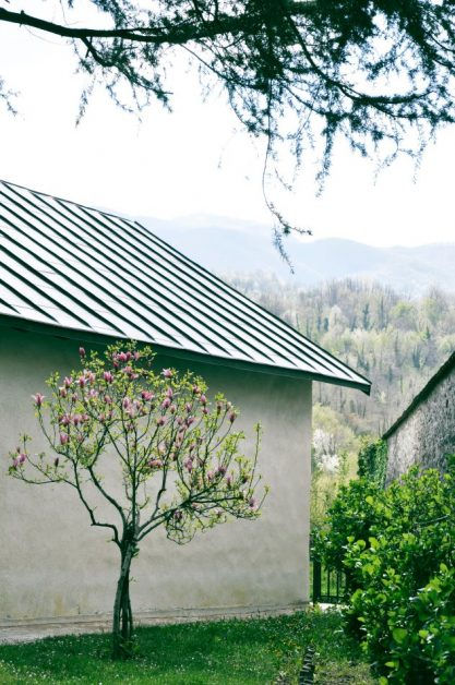 A tree with purple flowers in front of a metal-roofed home. Photo by Евгений Дмитриев on Unsplash.