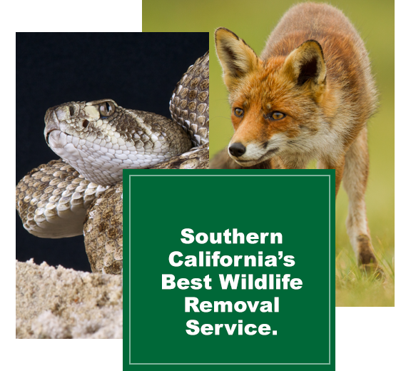 best-wildlife-removal-service
