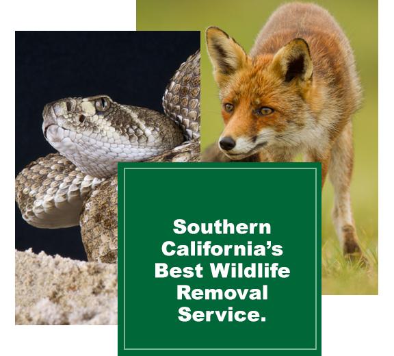 best-wildlife-removal-service