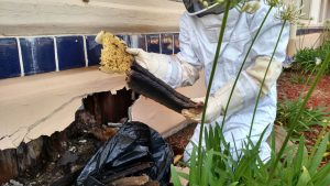 honeycomb-removal-clean-up-from-open-residential-structure