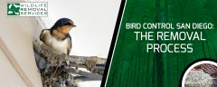 Bird Control San Diego Our Removal Process