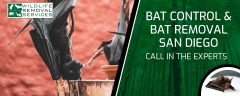 Bat Control And Bat Removal San Diego