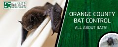 Orange County Bat Control - All About Bats