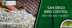 San Diego Bird Control - Why We Are The Best