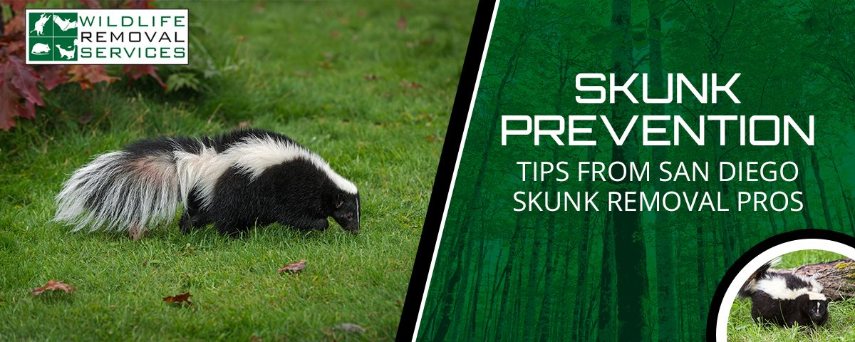 skunk prevention tips