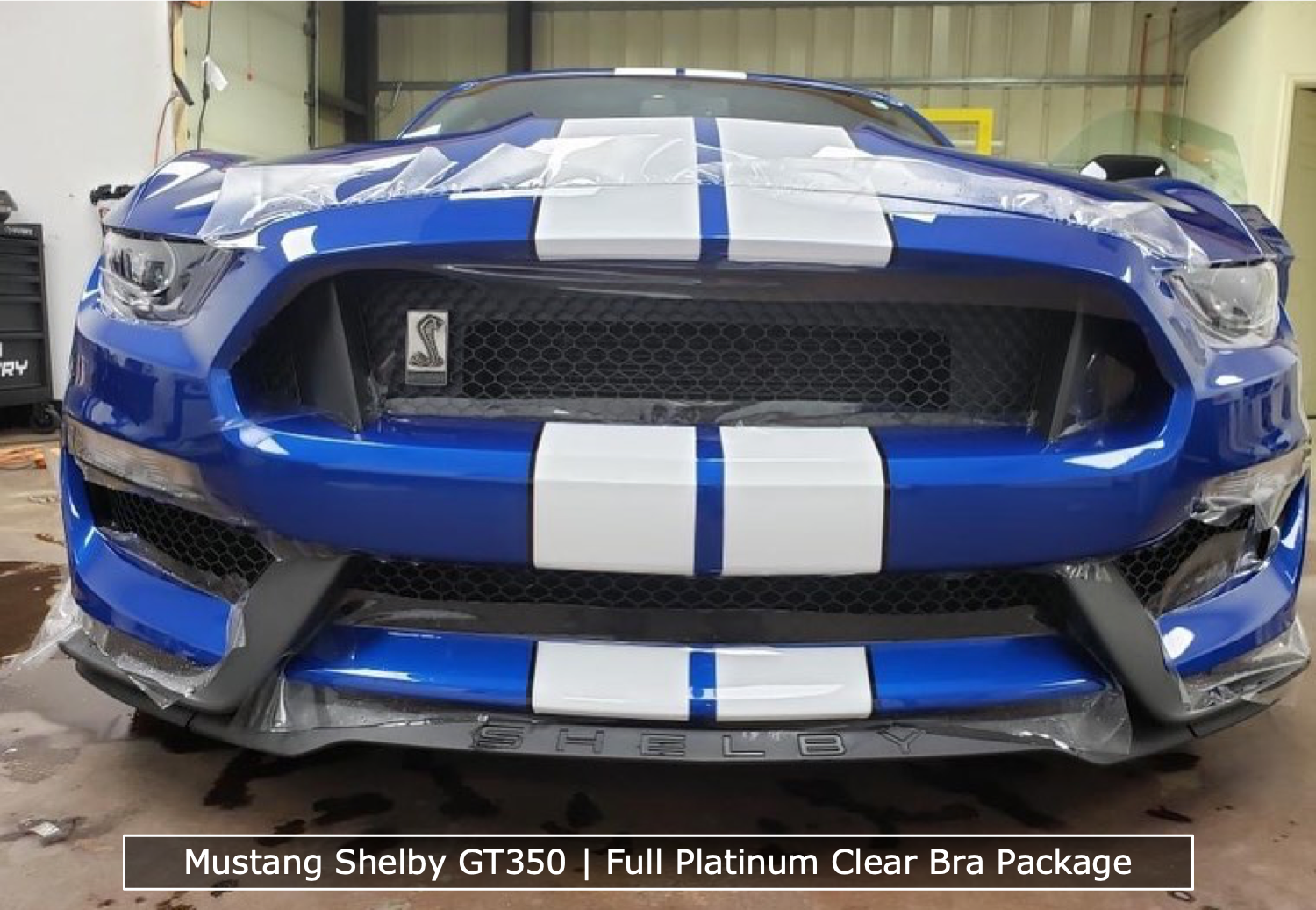 Clear Bra Being Installed On Shelby Mustang