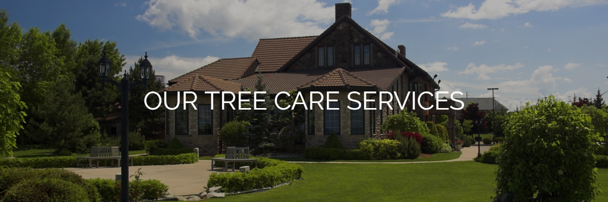 Tree Removal Fort Collins | Tree Pruning Loveland | Tree Care
