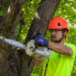 Cutting Large Branches With a Chainsaw