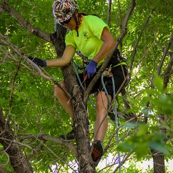 Tree Care Expert Removing Branches