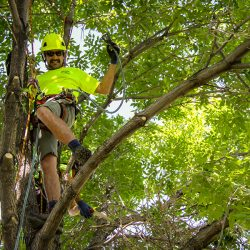 Tree Care Expert in Tree Canopy