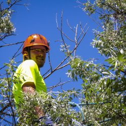 Tree Care Expert in Tree