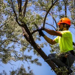 Worker Cutting Tree Branch