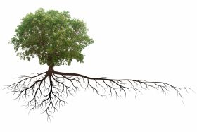 Tree With Roots Diagram