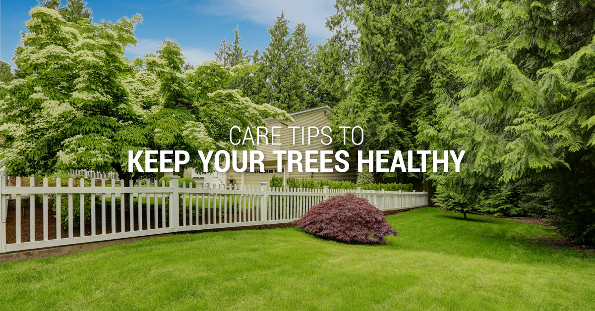 Care Tips to Keep Your Trees Healthy Banner