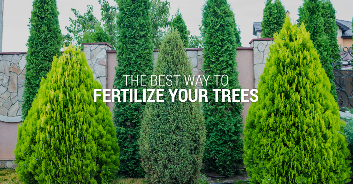The Best Ways to Fertilize Trees Banner