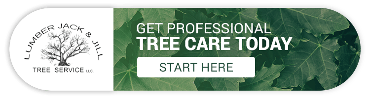 Tree Care Northern Colorado: What Leaves Say About Tree Health