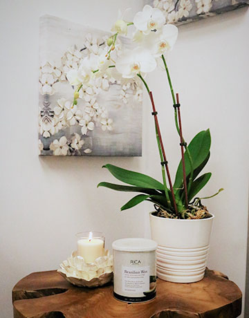 fiore waxing orchid