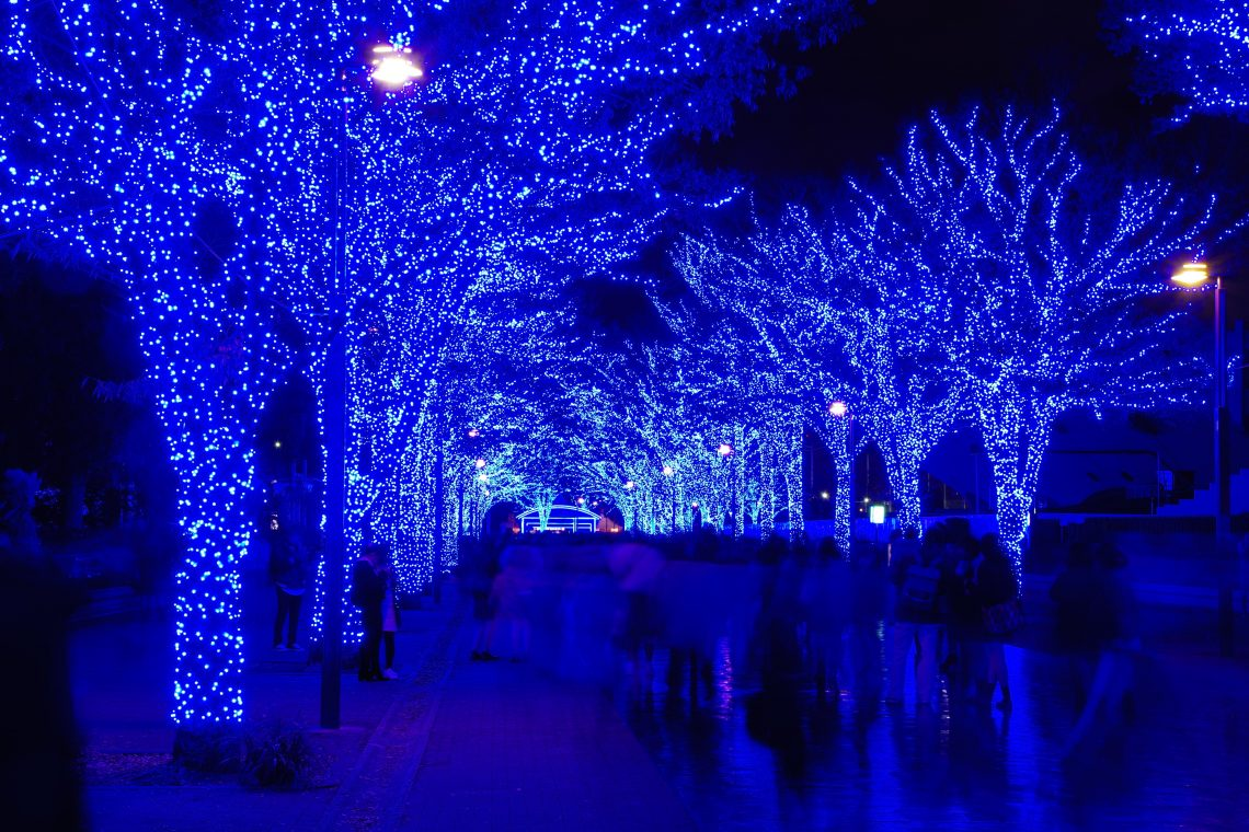 trees decorated with lights