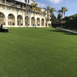 Hotel Lawn Made of Turf - Five Star Turf Commercial